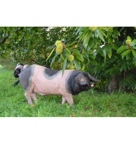 jambon tranché de porc basque Kintoa